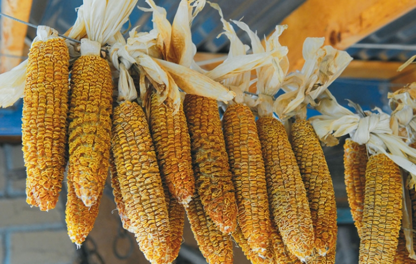 If chiles are the prom queens of New Mexican cuisine, corn is the class valedictorian.