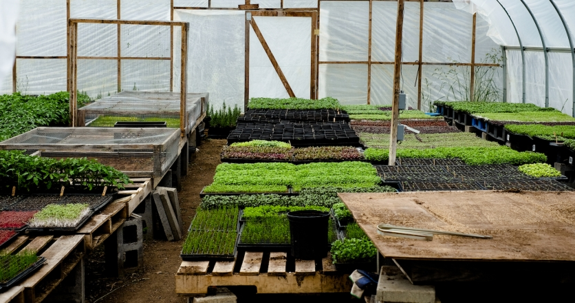 How Lovin Mama Farm In Amsterdam New York Is Handling Business During The Covid 19 Crisis Edible Capital District