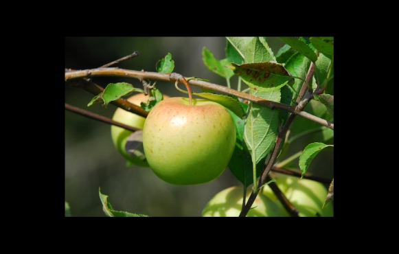 Cinna-Vanilla Applesauce recipe.